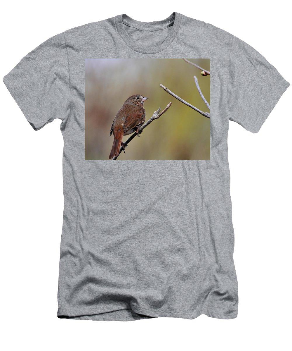 Doug Lloyd Men's T-Shirt (Athletic Fit) featuring the photograph Fox Sparrow by Doug Lloyd