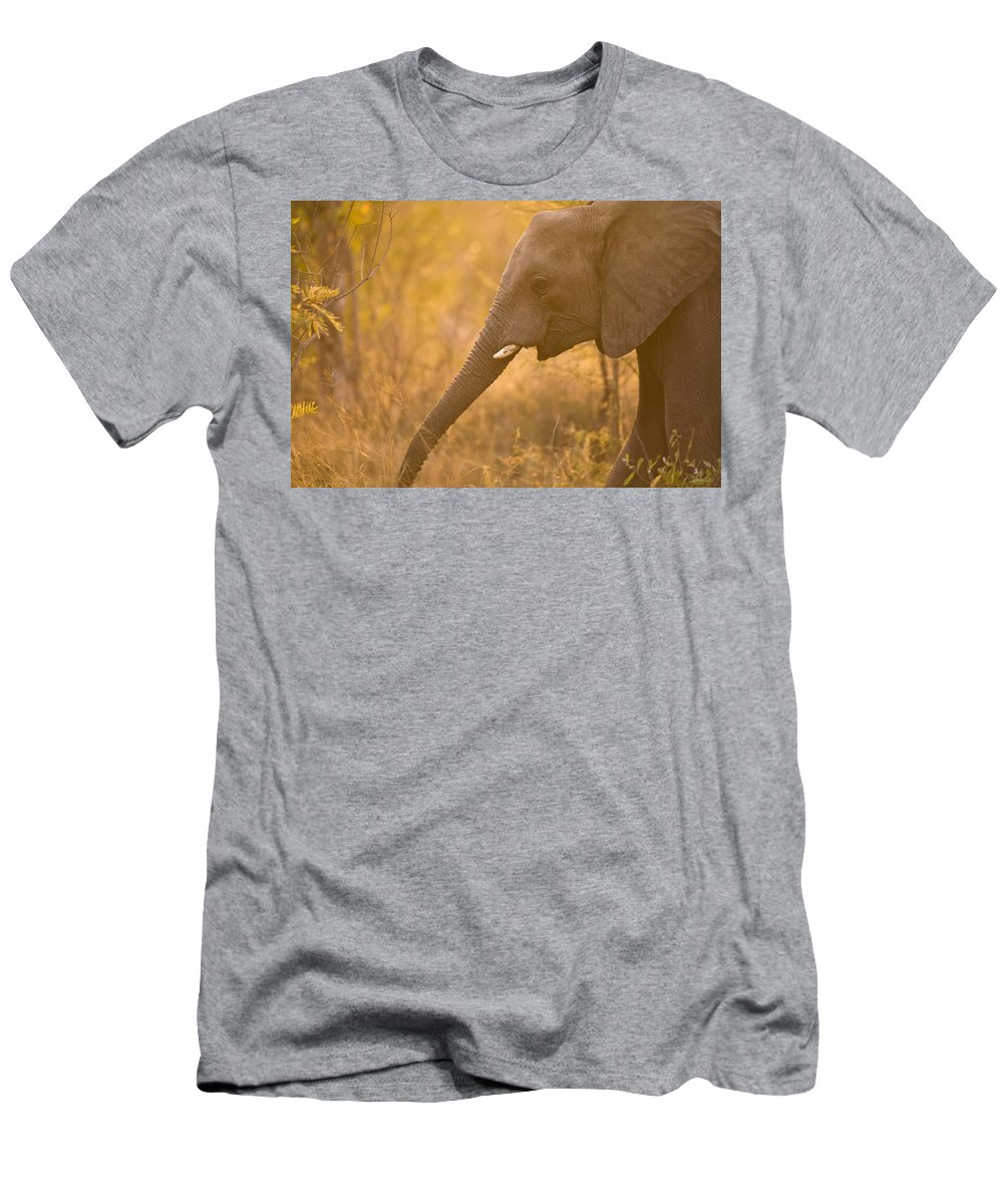 African Men's T-Shirt (Athletic Fit) featuring the photograph African Elephant Loxodonta Africana by Stuart Westmorland