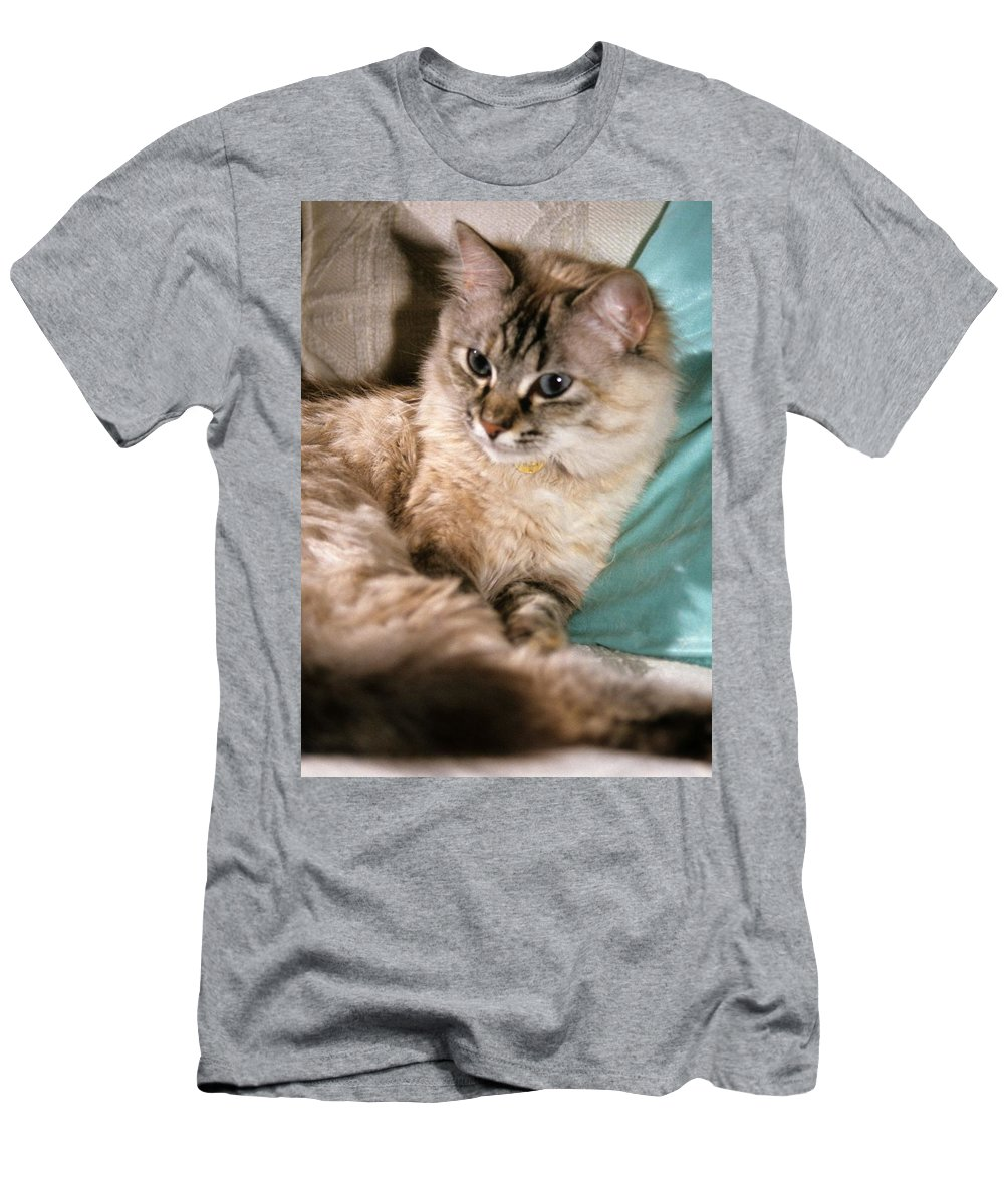 Mixed Breed Cat Men's T-Shirt (Athletic Fit) featuring the photograph Alert Mixed Breed by Larry Allan