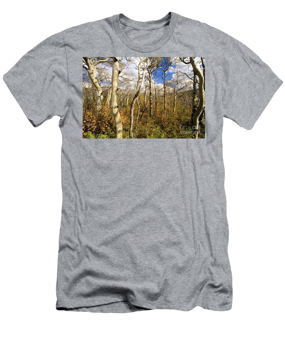 Aspen Trees Men's T-Shirt (Athletic Fit) featuring the photograph Aspen Glow by Adam Jewell