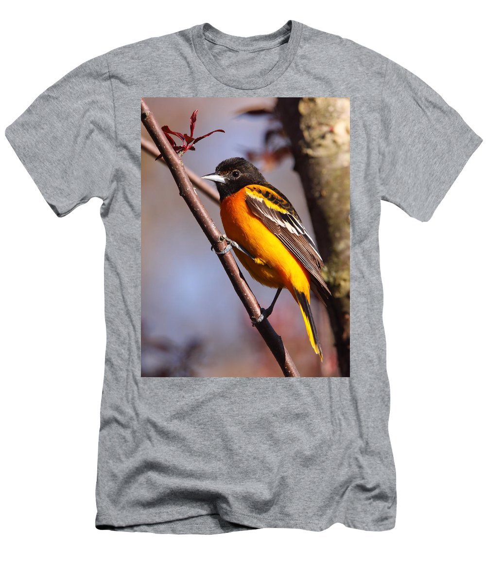 Oriole Men's T-Shirt (Athletic Fit) featuring the photograph Baltimore Oriole Iv by Bruce J Robinson