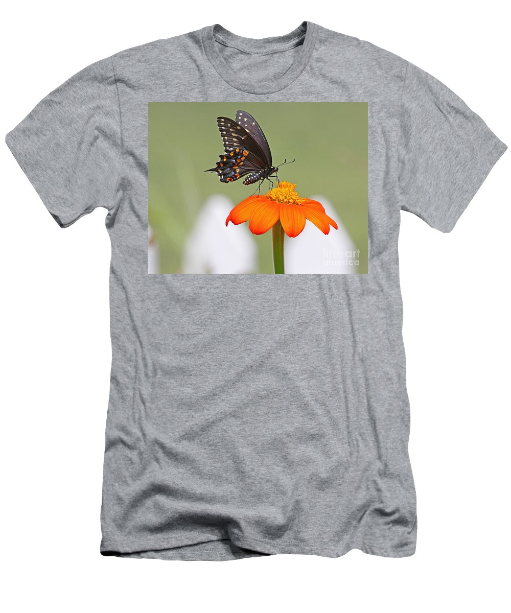Black Swallowtail Butterfly Men's T-Shirt (Athletic Fit) featuring the photograph Black Swallowtail Butterfly by Jack Schultz