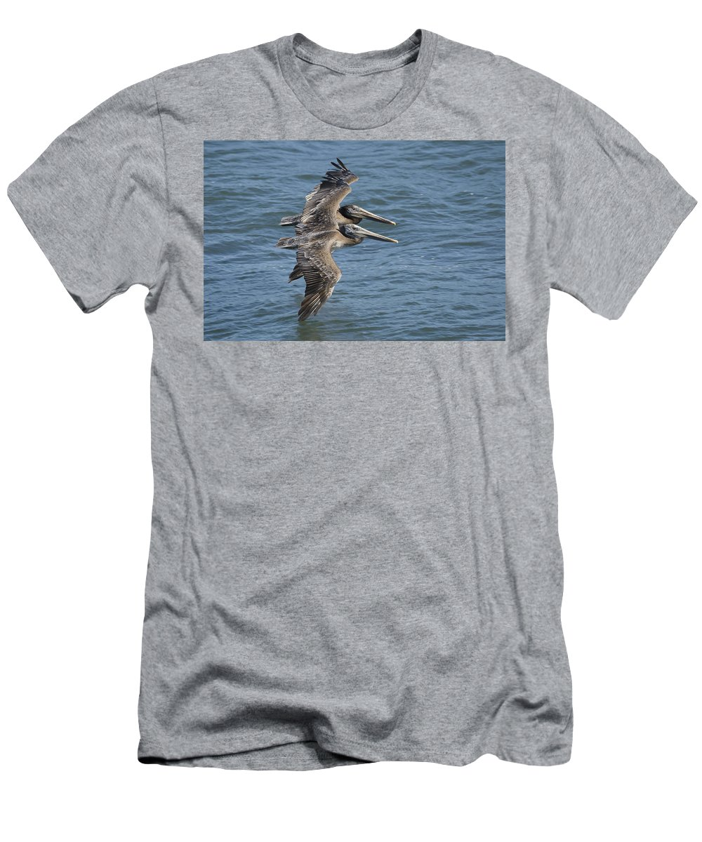 00429742 T-Shirt featuring the photograph Brown Pelican Juveniles Flying Santa by Sebastian Kennerknecht