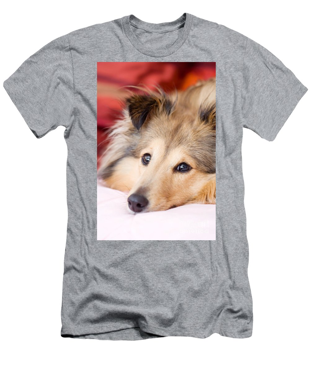 Dog Men's T-Shirt (Athletic Fit) featuring the photograph Brown Sheltie by Kati Finell