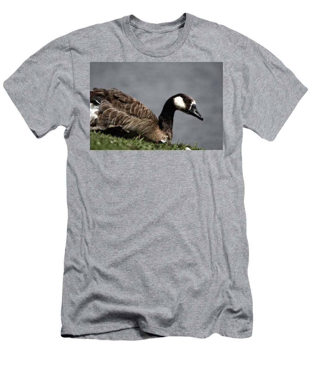 Bird Men's T-Shirt (Athletic Fit) featuring the photograph Canadian Goose by Donna Greene