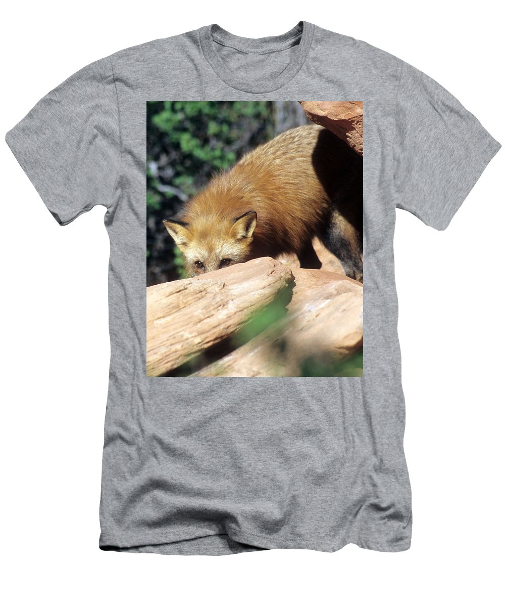 Red Fox Men's T-Shirt (Athletic Fit) featuring the photograph Cautious Red Fox by Larry Allan