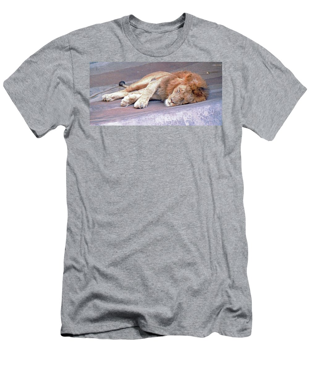 Animal Men's T-Shirt (Athletic Fit) featuring the photograph Contentment by Greg Plamp