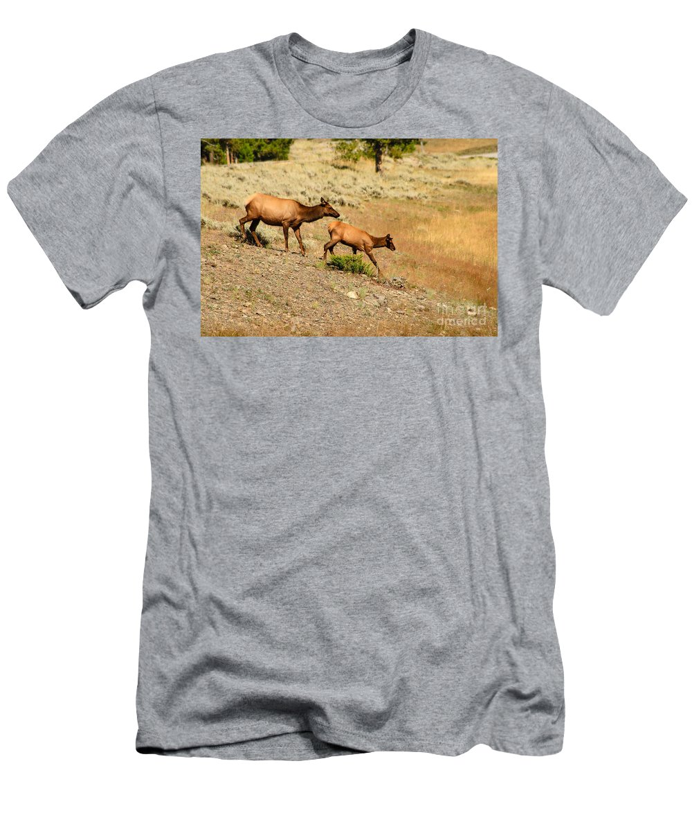 Animals Men's T-Shirt (Athletic Fit) featuring the photograph Cow And Calf Elk by Robert Bales