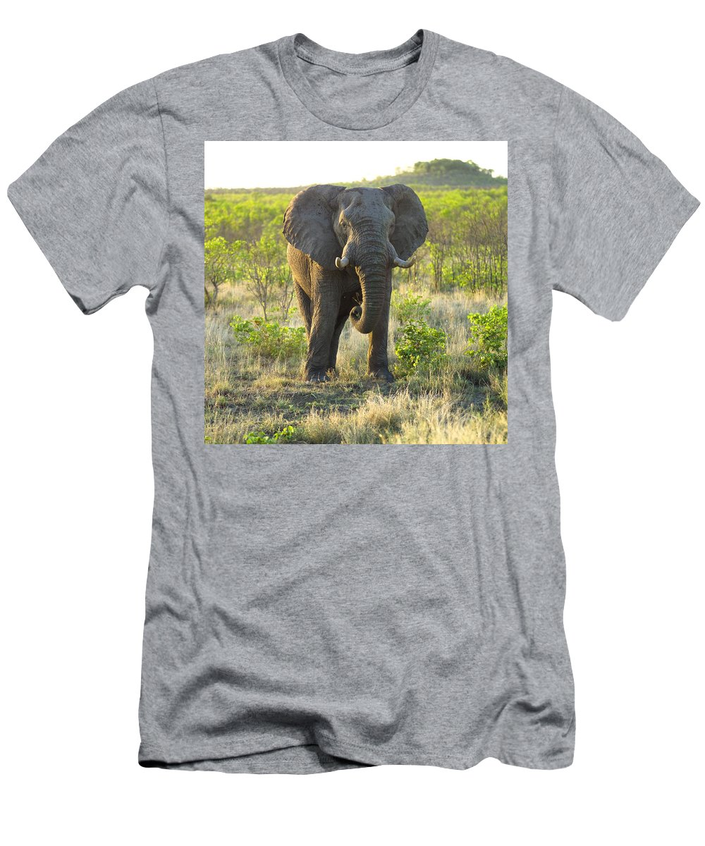 Animal Men's T-Shirt (Athletic Fit) featuring the photograph Elephant by Keith Levit