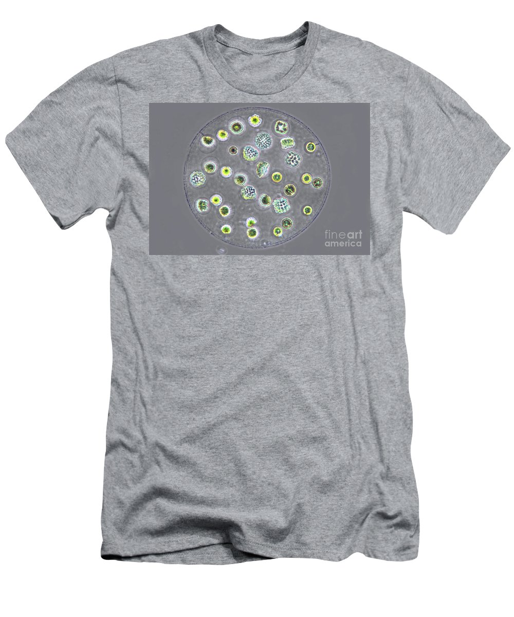 Light Microscopy Men's T-Shirt (Athletic Fit) featuring the photograph Eudorina by M. I. Walker