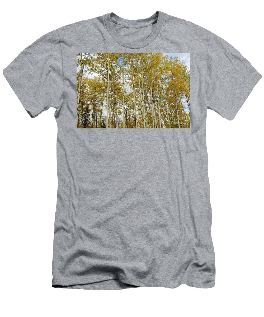 Fort Mcmurray Landscape Men's T-Shirt (Athletic Fit) featuring the photograph Falling For The Birch And Aspens by Alanna DPhoto