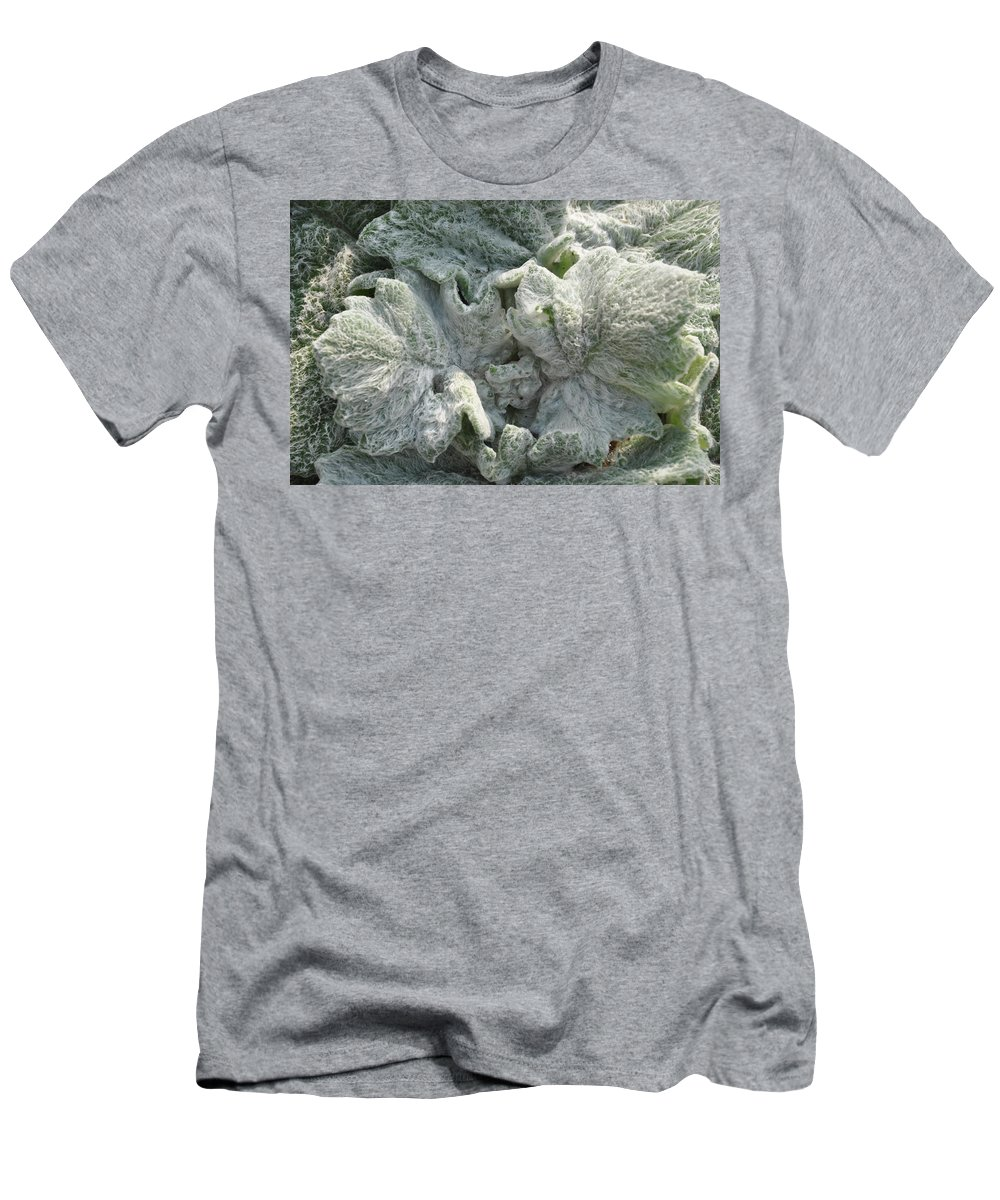 Plant Men's T-Shirt (Athletic Fit) featuring the photograph Fluffy by Rich Bodane
