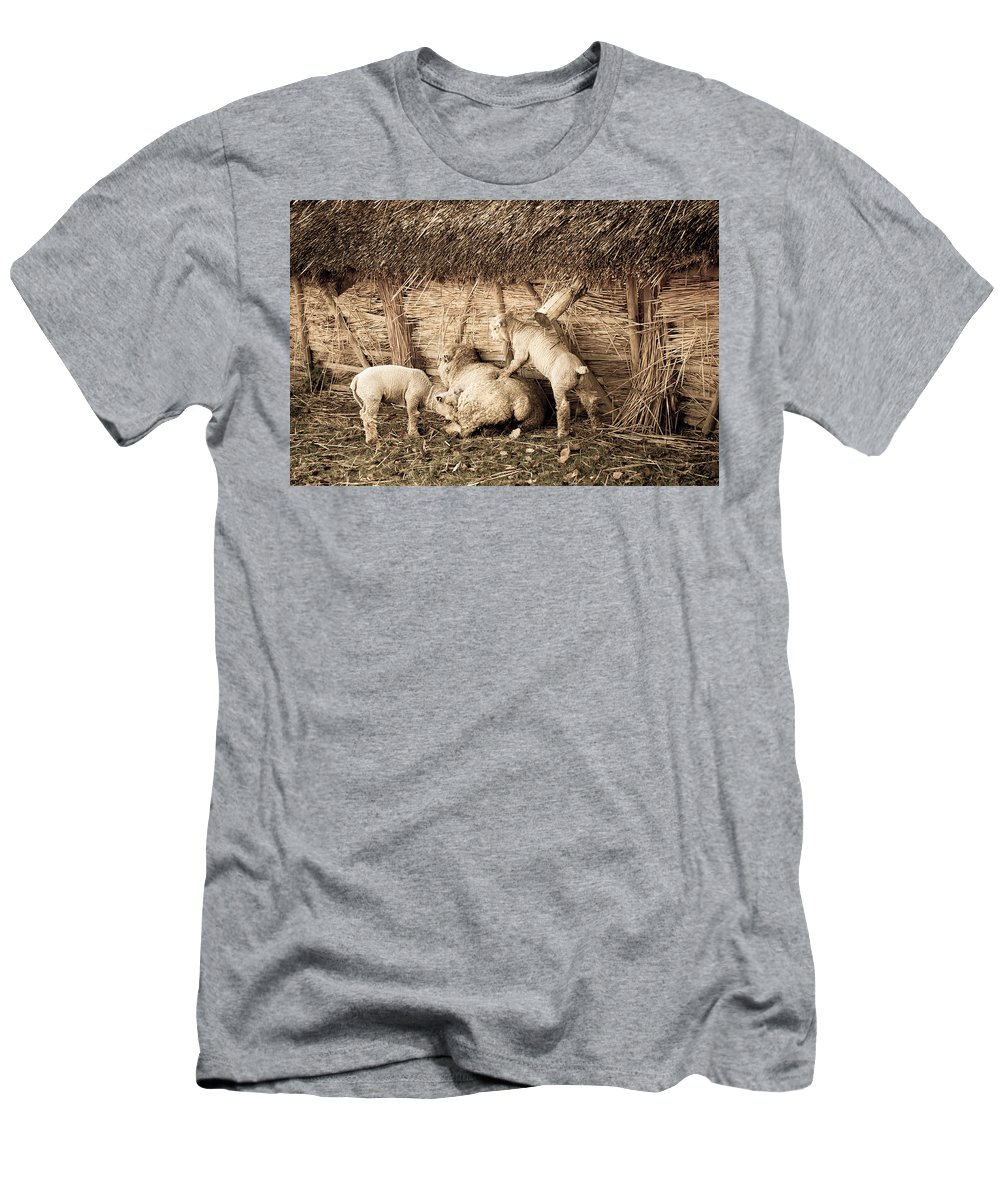 Lamb Men's T-Shirt (Athletic Fit) featuring the photograph Get Up Mum by Dawn OConnor