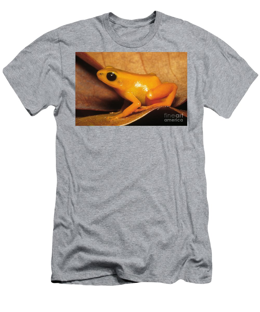 Animal Men's T-Shirt (Athletic Fit) featuring the photograph Golden Mantella Frog Mantella Aurantiaca by Dante Fenolio