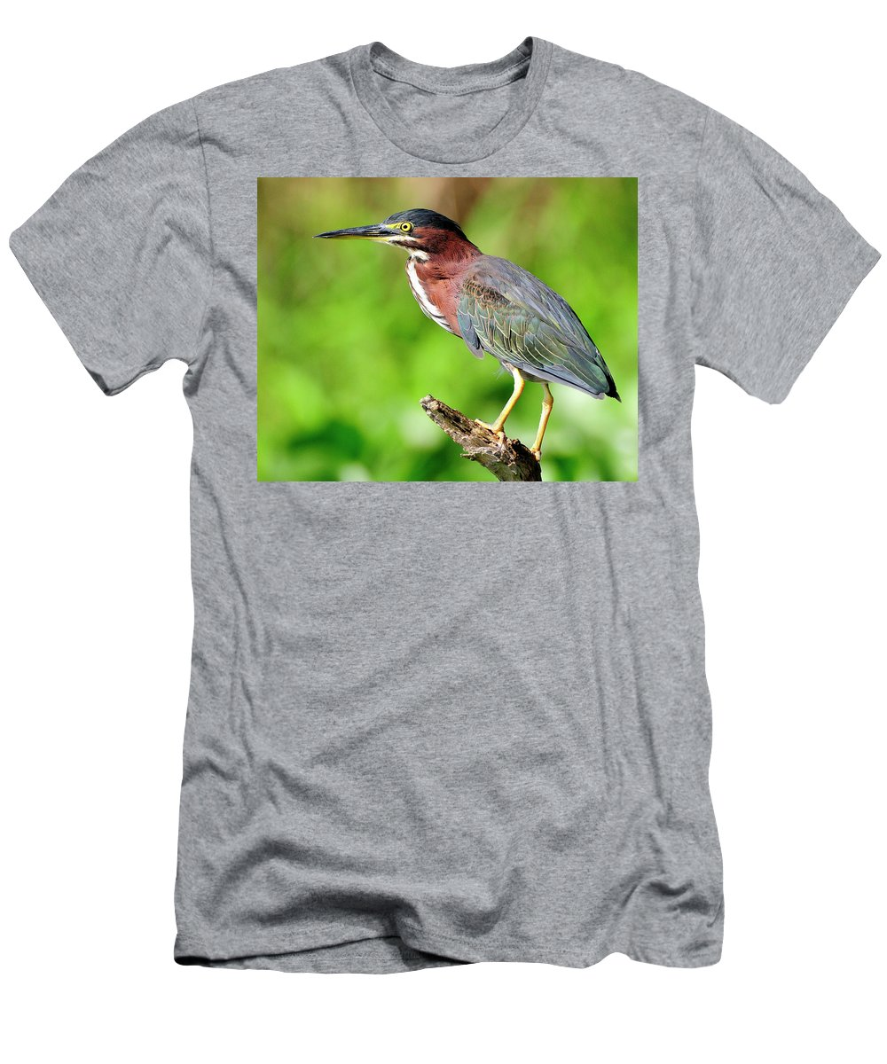 Green Men's T-Shirt (Athletic Fit) featuring the photograph Green Heron by Bill Dodsworth