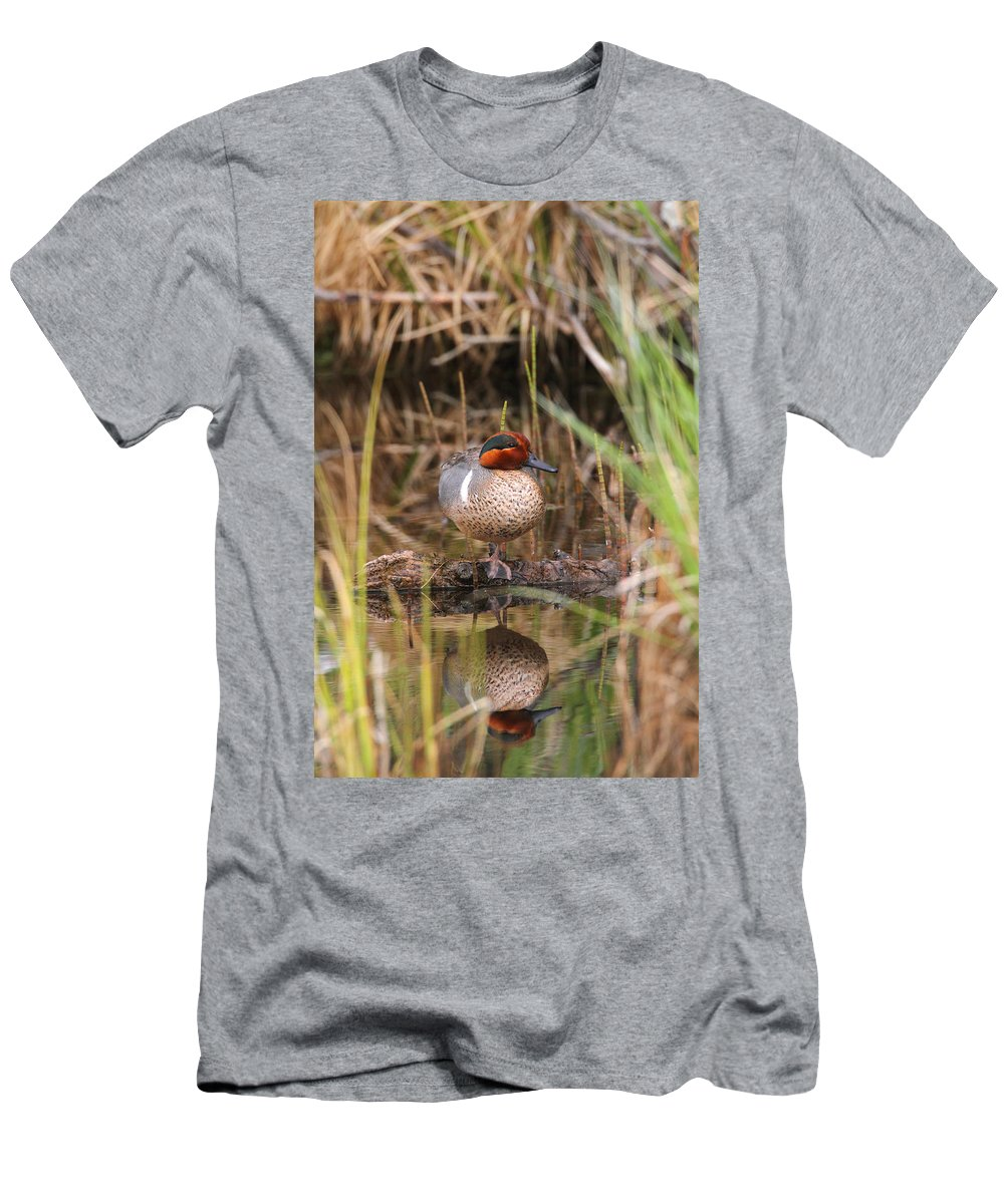 Doug Lloyd Men's T-Shirt (Athletic Fit) featuring the photograph Greenwing Teal by Doug Lloyd