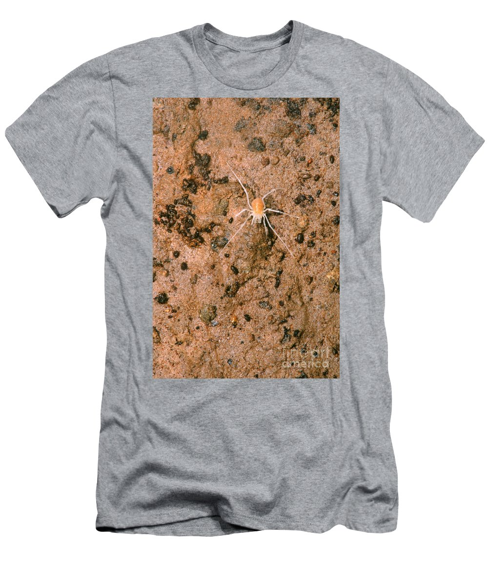 Animal Men's T-Shirt (Athletic Fit) featuring the photograph Harvestman Crosbyella Sp. In Cave by Dante Fenolio
