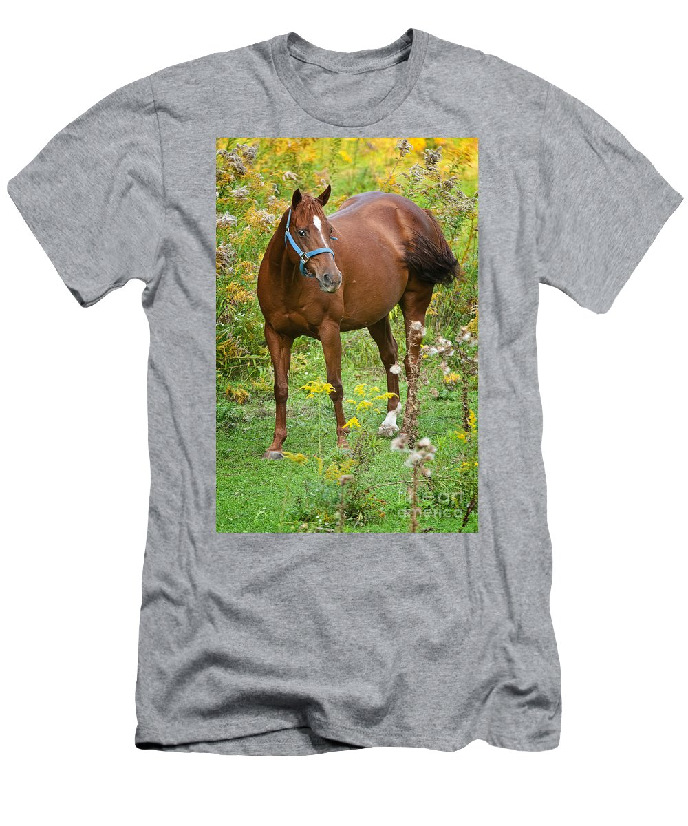 Horse Men's T-Shirt (Athletic Fit) featuring the photograph Horse In Field by Michael Cummings