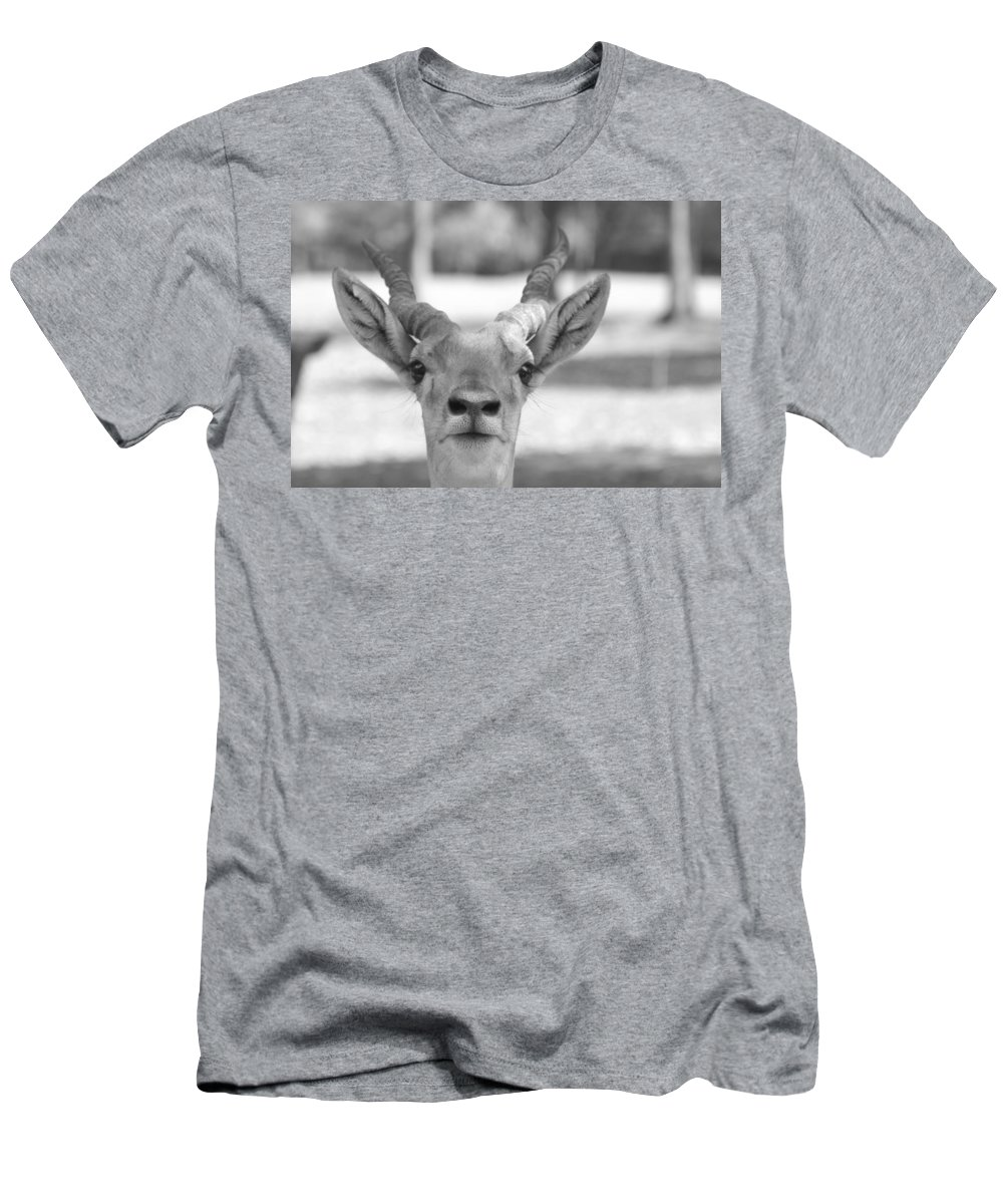 Impala Men's T-Shirt (Athletic Fit) featuring the photograph Impala -black And White by Douglas Barnard