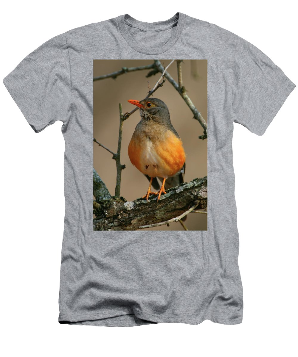 Thrush Men's T-Shirt (Athletic Fit) featuring the photograph Kurrichane Thrush by Bruce J Robinson