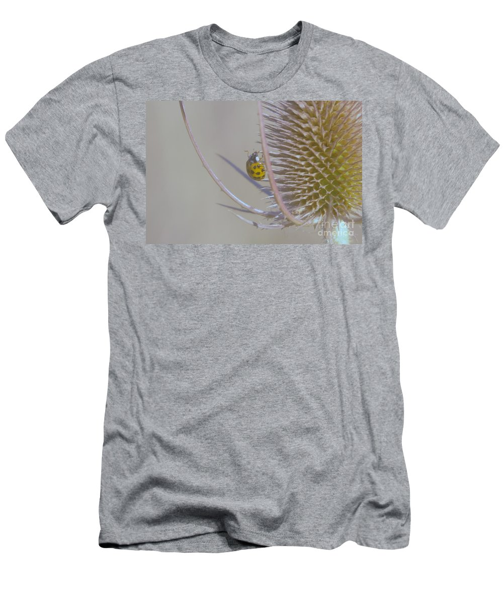 Insects Men's T-Shirt (Athletic Fit) featuring the photograph Ladybug Croosing The Prickles by Jeff Swan