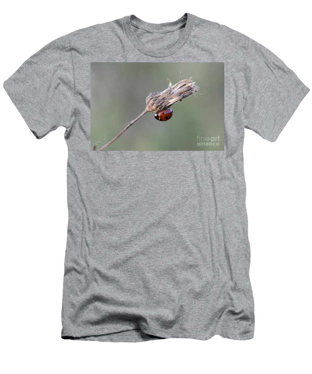 Ladybug Men's T-Shirt (Athletic Fit) featuring the photograph Ladybug On Dried Thistle by Bob Christopher