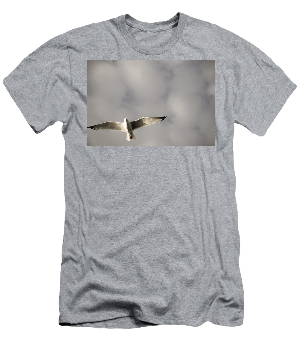 Copy Space Men's T-Shirt (Athletic Fit) featuring the photograph Lake Of The Woods, Ontario, Canada Bird by Keith Levit