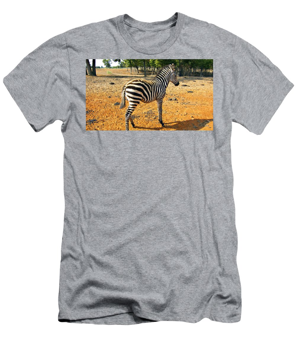 Juvenile Zebra Men's T-Shirt (Athletic Fit) featuring the photograph Little Stripes by Douglas Barnard