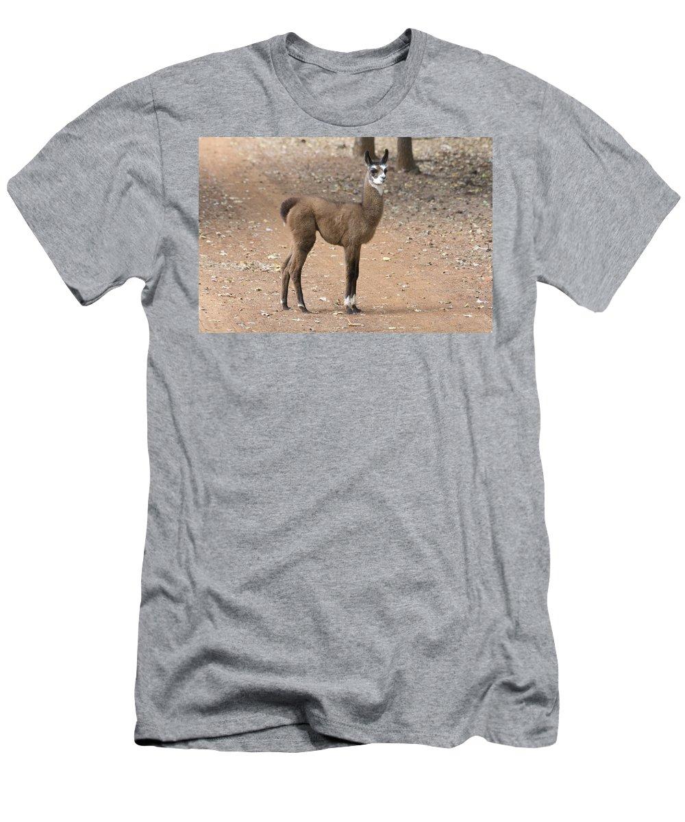 Lama Juvenile Men's T-Shirt (Athletic Fit) featuring the photograph Little Two-toner by Douglas Barnard