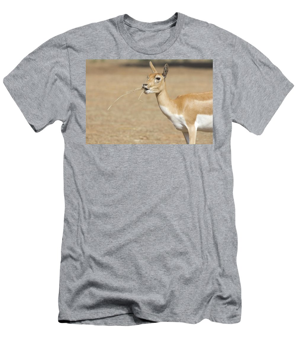 Impala Men's T-Shirt (Athletic Fit) featuring the photograph Lunchtime by Douglas Barnard