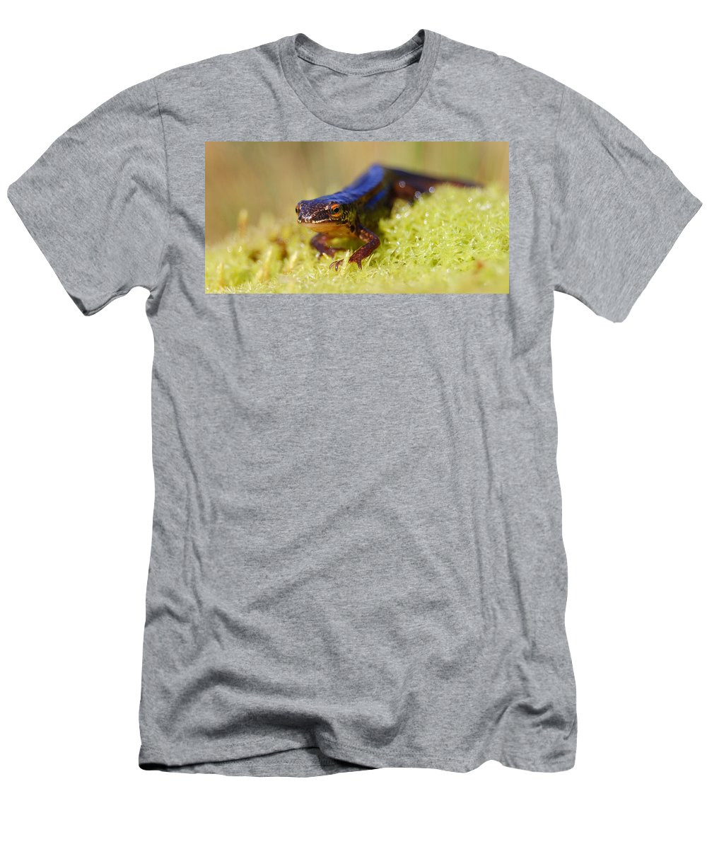 Palmate Newt Men's T-Shirt (Athletic Fit) featuring the photograph Palmate Newt by Gavin Macrae