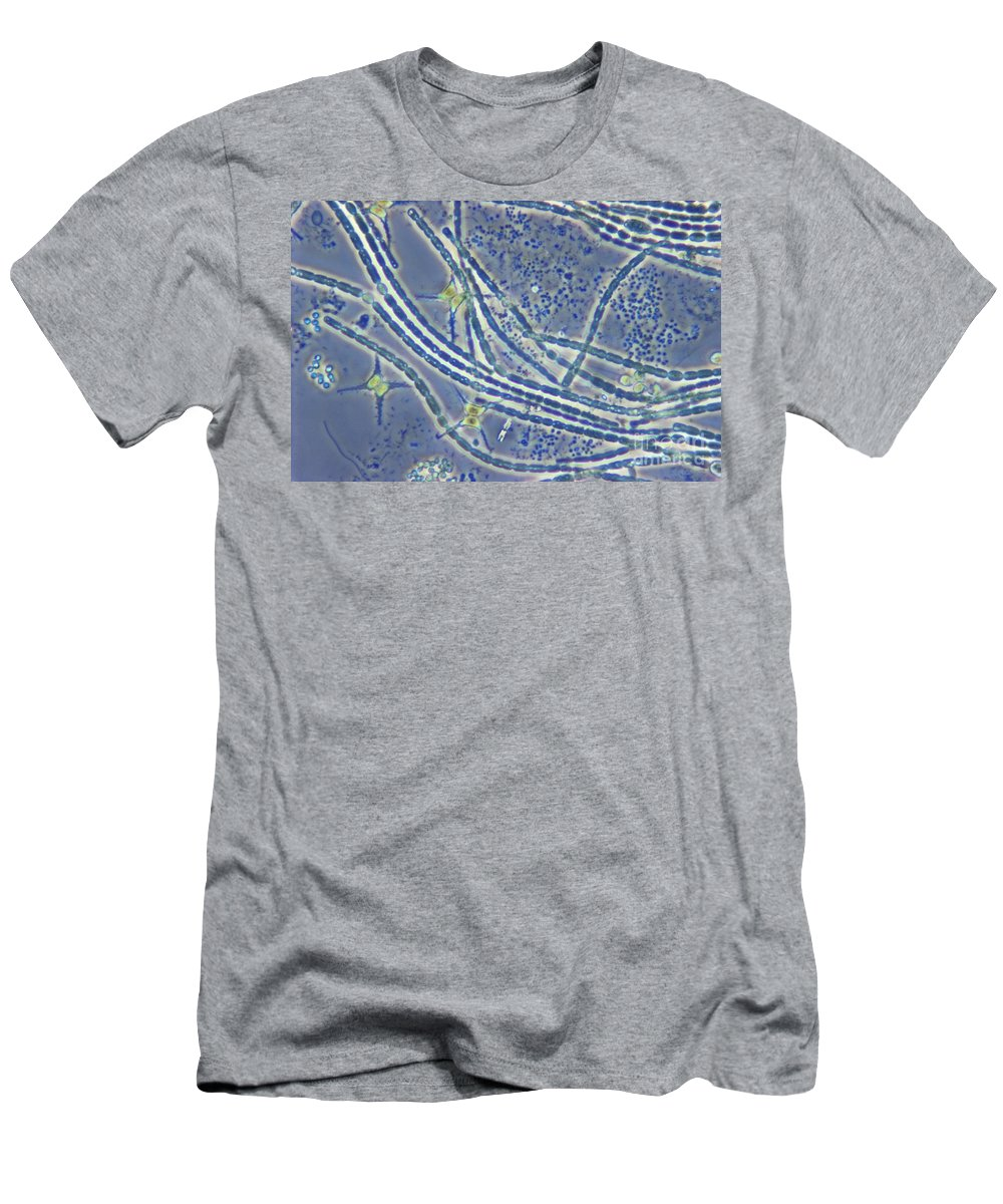 Science Men's T-Shirt (Athletic Fit) featuring the photograph Phytoplankton, Lm by M. I. Walker
