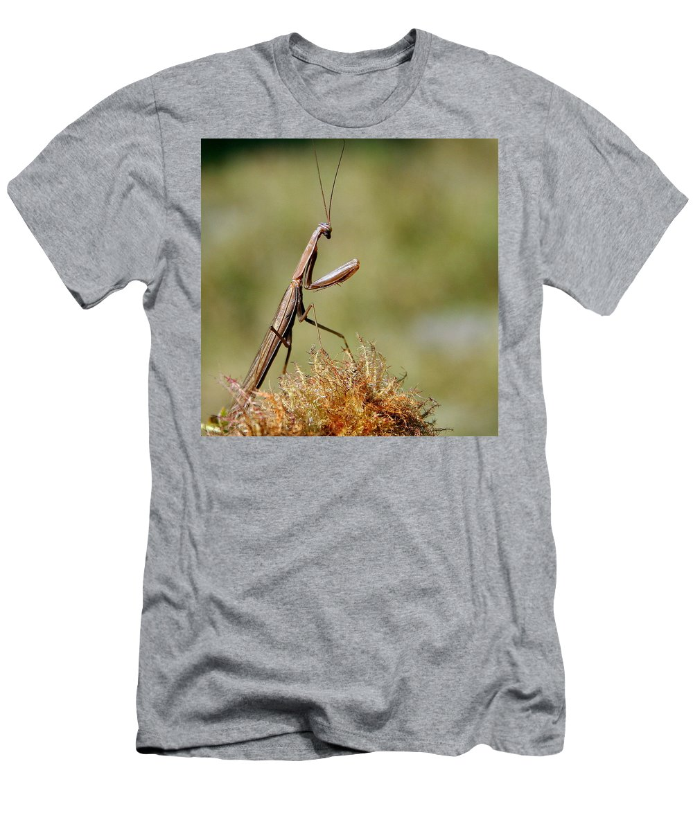 Praying Mantis Men's T-Shirt (Athletic Fit) featuring the photograph Praying Mantis by Laurel Talabere