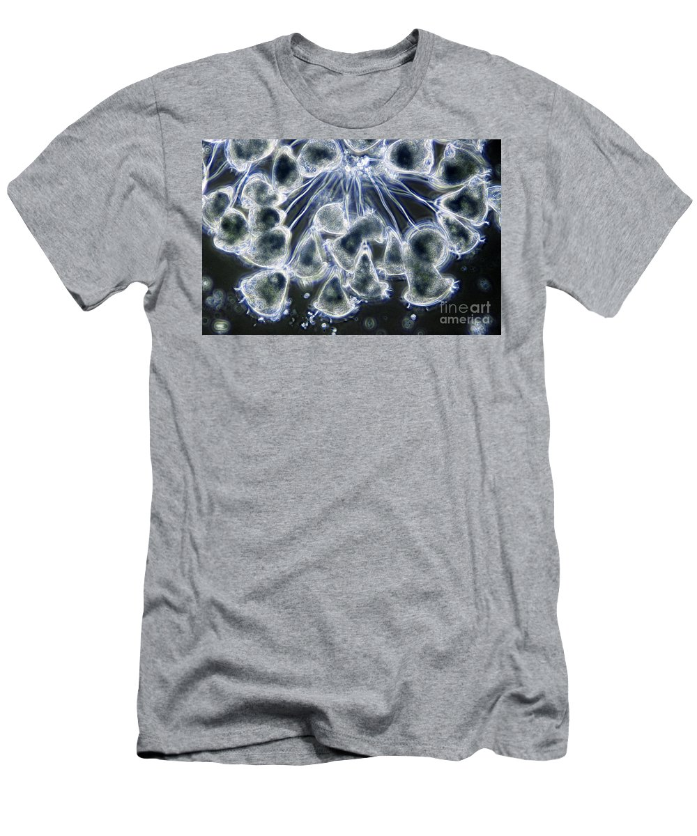 Protozoa Vorticella Men's T-Shirt (Athletic Fit) featuring the photograph Protozoa Vorticella by M. I. Walker