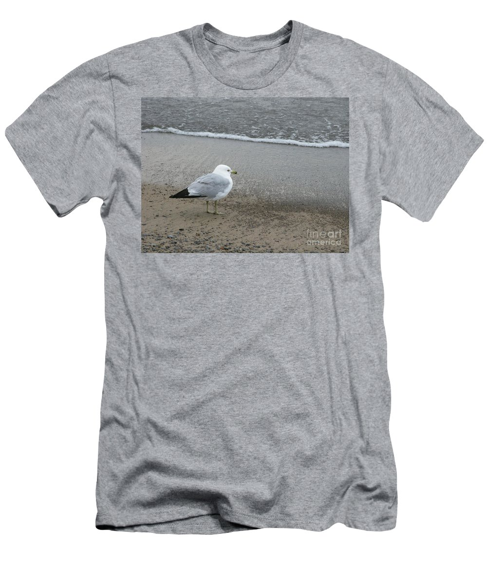Ring-billed Gull Men's T-Shirt (Athletic Fit) featuring the photograph Ring-billed Gull by Ann Horn