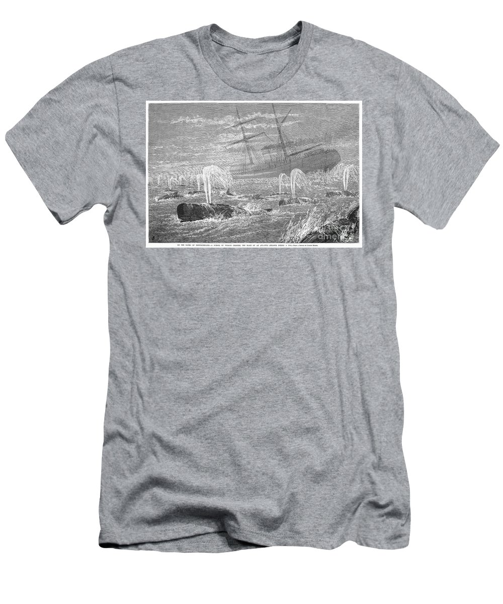 1876 Men's T-Shirt (Athletic Fit) featuring the photograph School Of Whales, 1876 by Granger