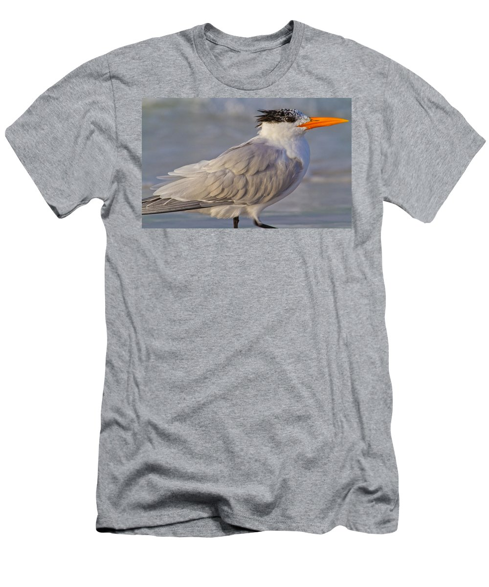 Royal Men's T-Shirt (Athletic Fit) featuring the photograph Siesta Key Royal Tern by Betsy Knapp