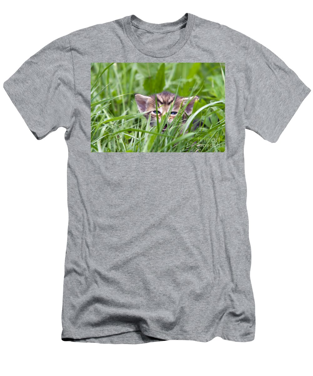 Adorable Men's T-Shirt (Athletic Fit) featuring the photograph Small Kitten In The Grass by Michal Boubin