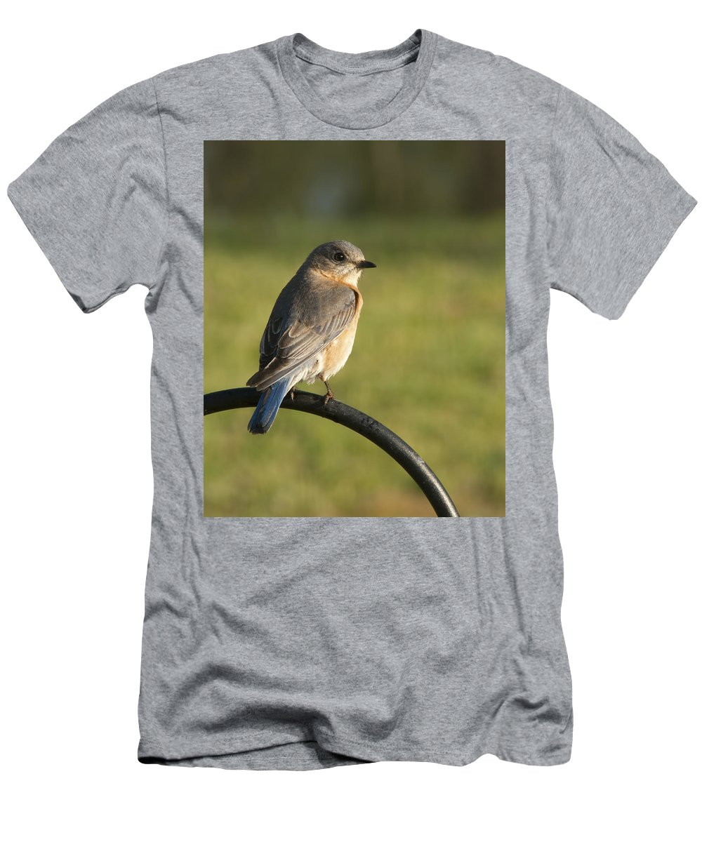 Sialia Sialis T-Shirt featuring the photograph The Bluebird Of Happiness by Kathy Clark