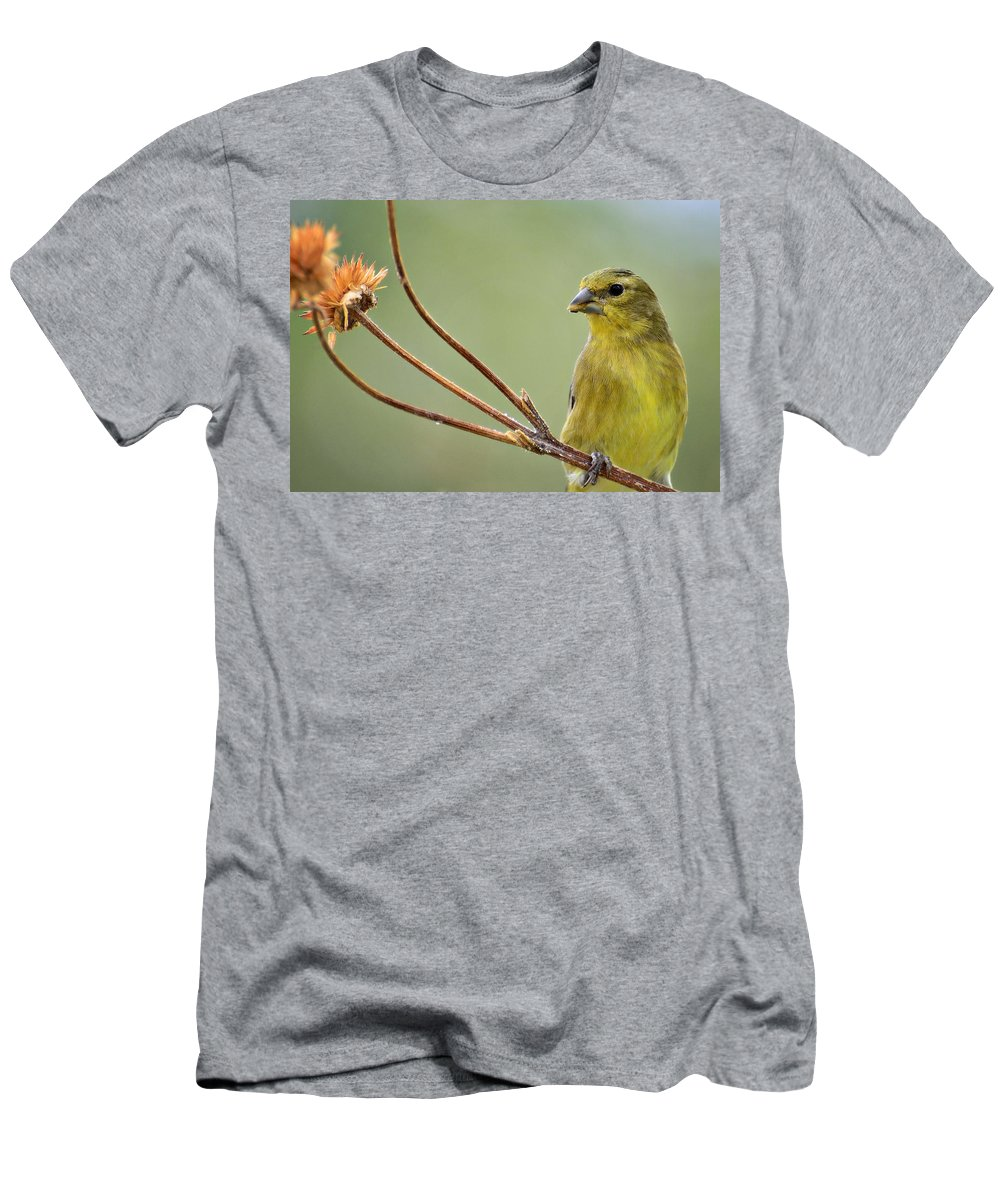 Lesser Gold Finch Men's T-Shirt (Athletic Fit) featuring the photograph The Finch by Saija Lehtonen