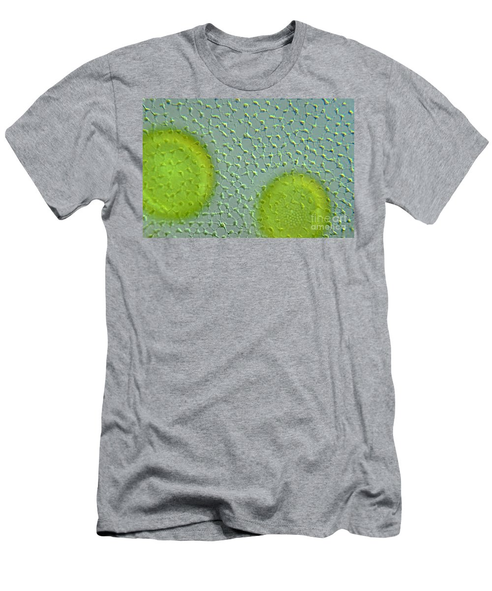 Histology Men's T-Shirt (Athletic Fit) featuring the photograph Volvox Globator Surface View Of Colony by M I Walker