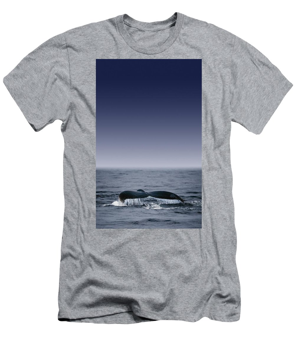 Animal Men's T-Shirt (Athletic Fit) featuring the photograph Whales Fluke by Darren Greenwood