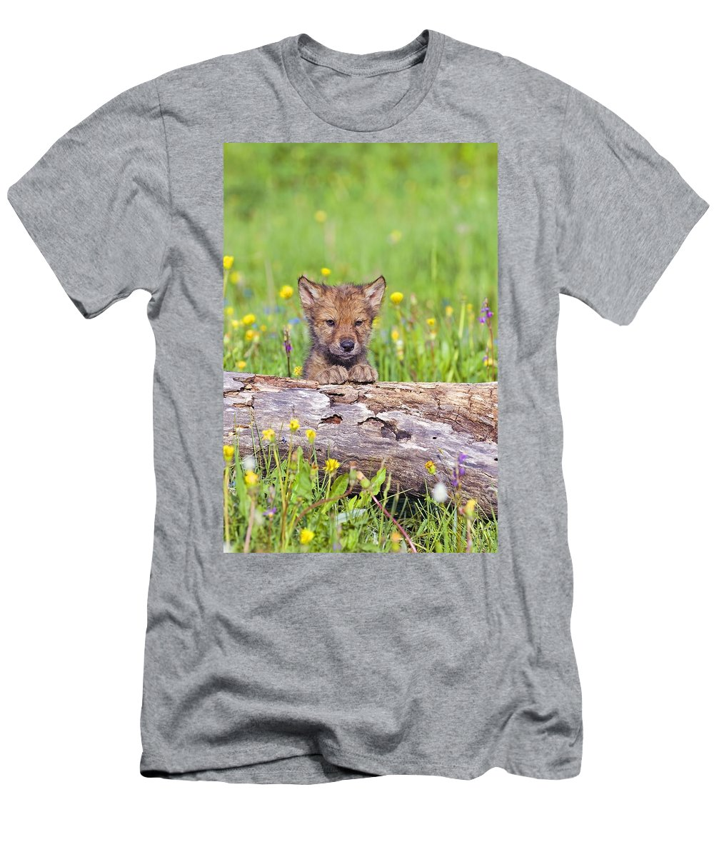 Animal Men's T-Shirt (Athletic Fit) featuring the photograph Young Wolf Cub Peering Over Log by John Pitcher