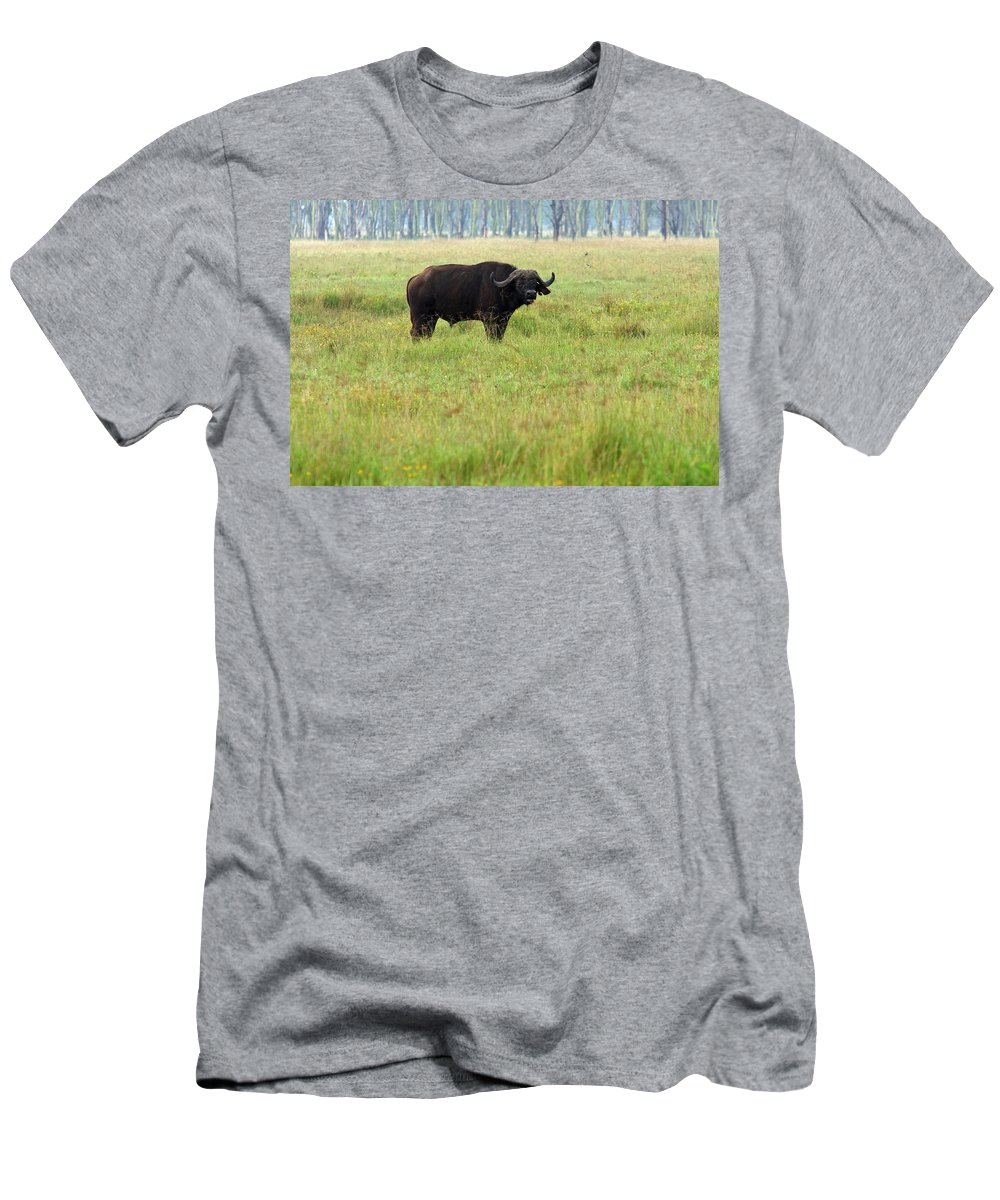 Water Buffalo Men's T-Shirt (Athletic Fit) featuring the photograph African Buffalo by Aidan Moran