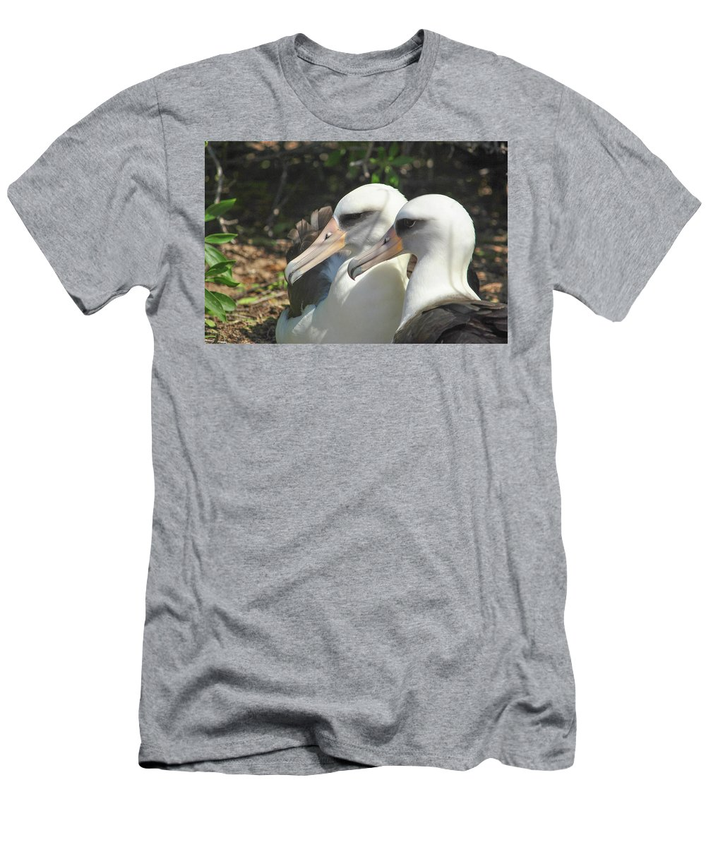 Laysan Albatross Men's T-Shirt (Athletic Fit) featuring the photograph Albatross Lovers by Megan Martens