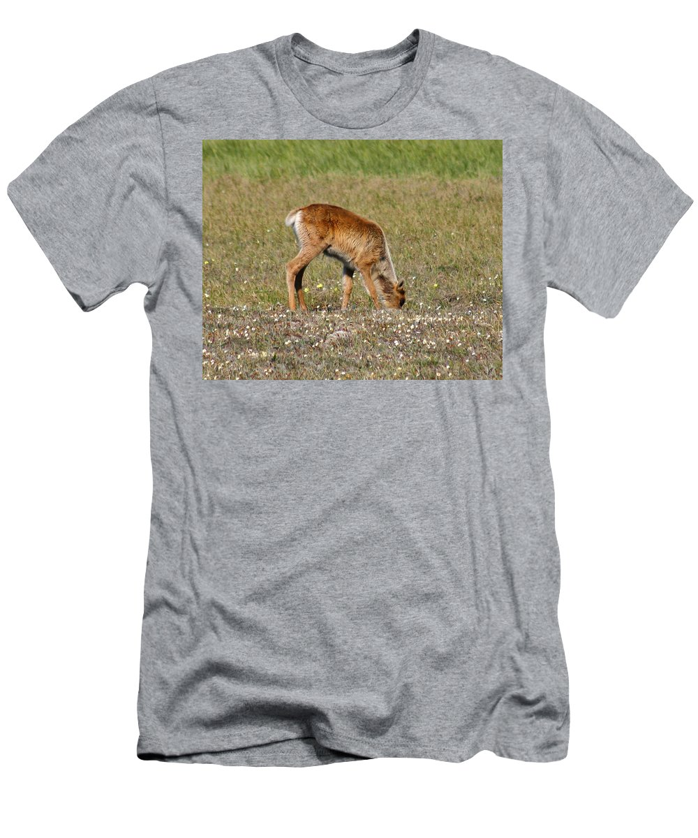 Deer Men's T-Shirt (Athletic Fit) featuring the photograph Caribou Fawn by Anthony Jones