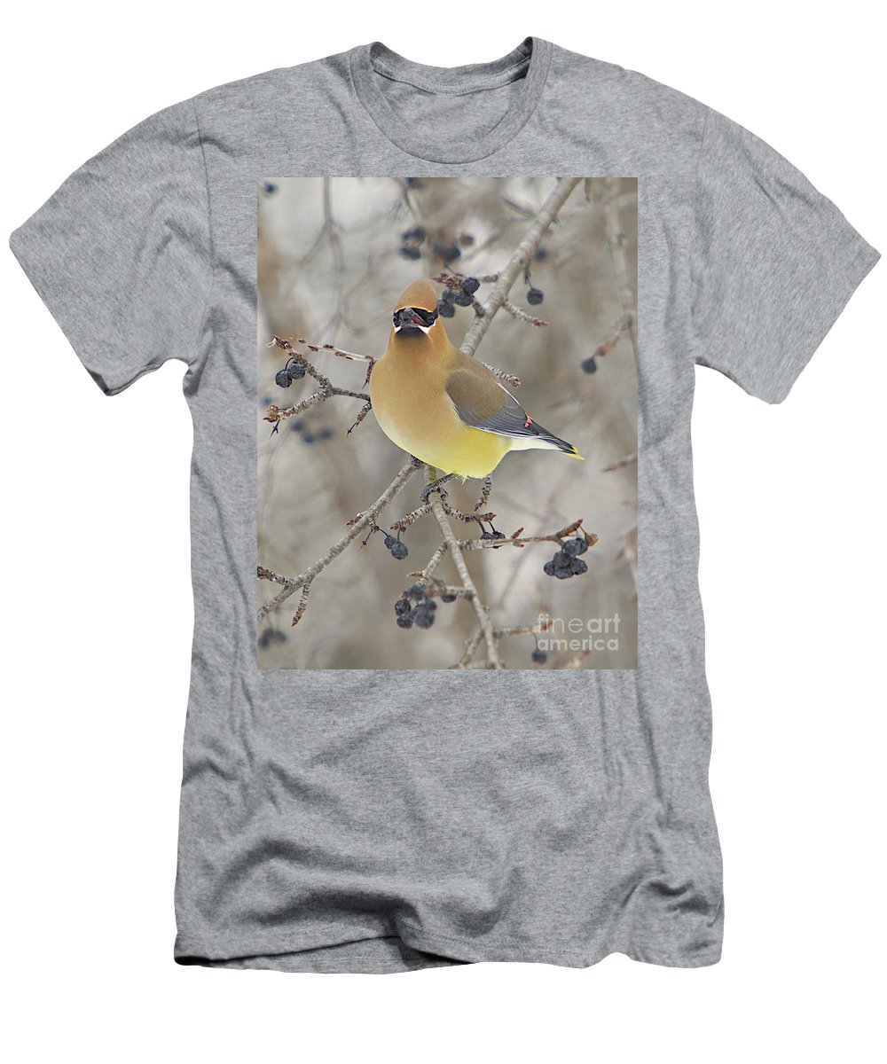 Cedar Wax Wing Men's T-Shirt (Athletic Fit) featuring the photograph Cedar Wax Wing by Robert Pearson