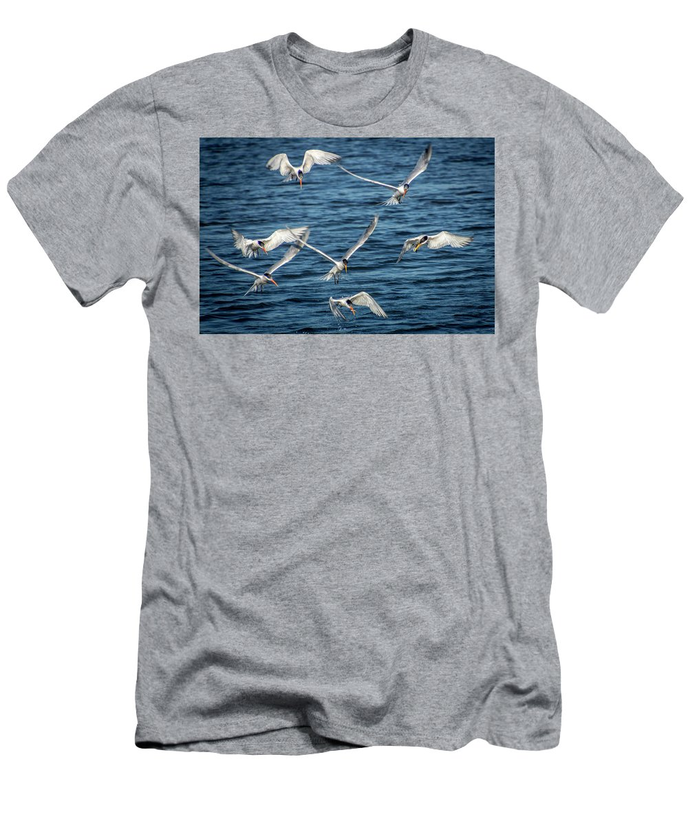 Bolsa Chica Ethological Reserve Men's T-Shirt (Athletic Fit) featuring the photograph Elegant Terns Diving For Fish by Donald Pash