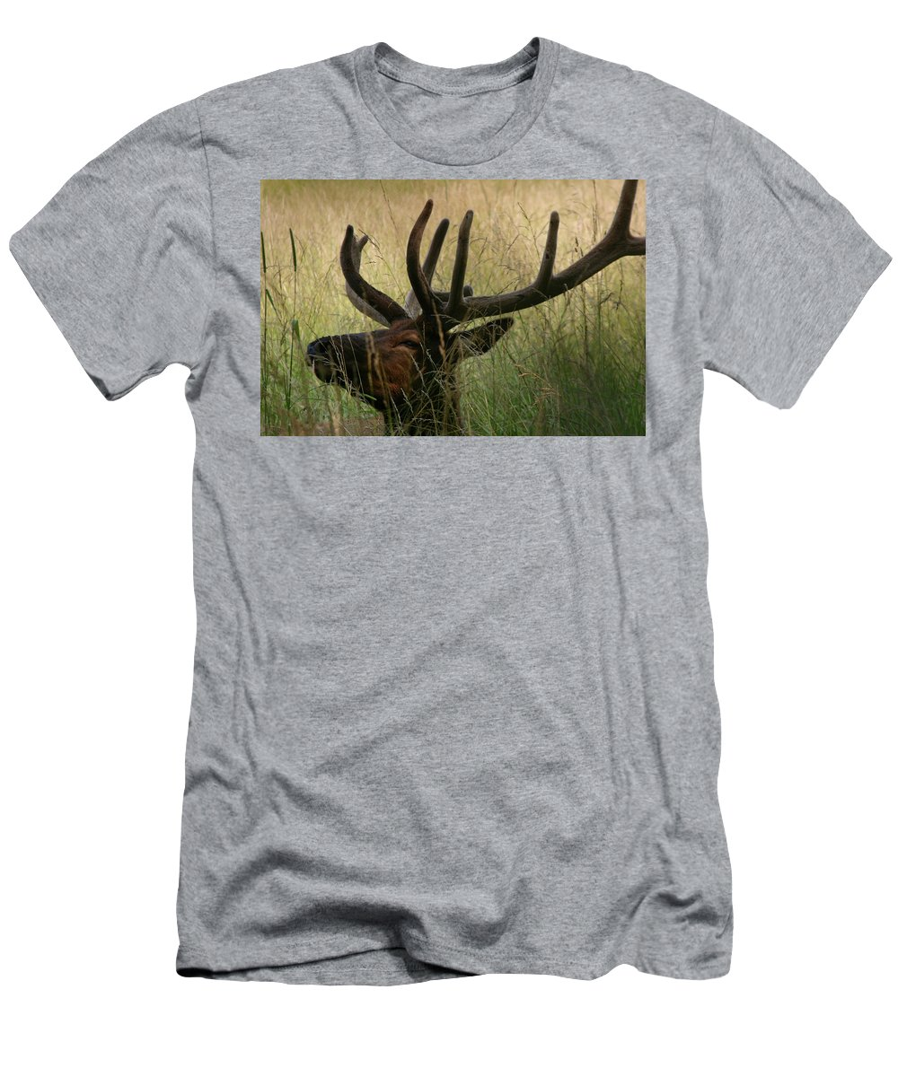 Elk Men's T-Shirt (Athletic Fit) featuring the photograph Resting Elk by Deborah Boydston