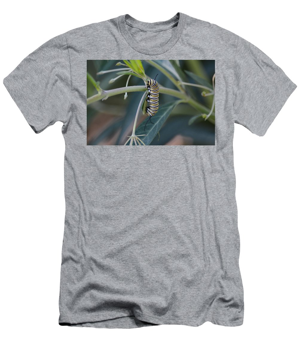 Catterpillars Men's T-Shirt (Athletic Fit) featuring the photograph Monarch Catterpillar by David Irwin